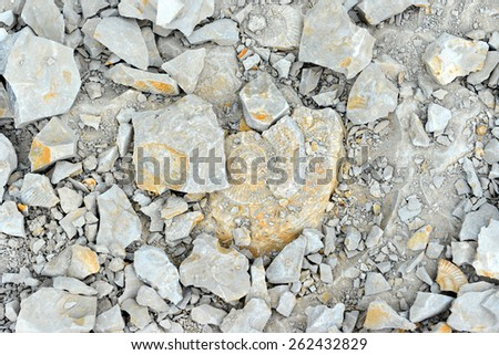 Ammonite fossil in limestone rock - stock photo