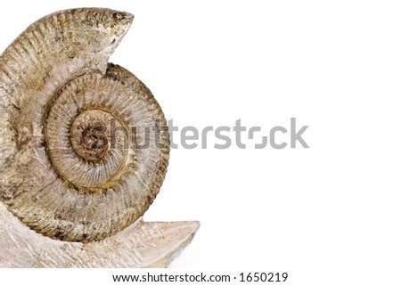 Ammonite fossil isolated over a white background - stock photo