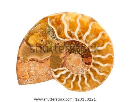 ammonite stone isolated on white - stock photo