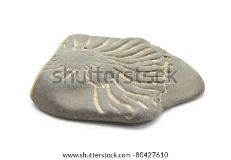 Ammonite trace on the stone on a white background - stock photo