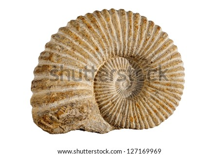 ammonites fossil - stock photo