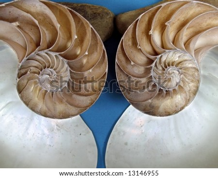 Ammonites Fossils -- these are a group of extinct marine animals - stock photo