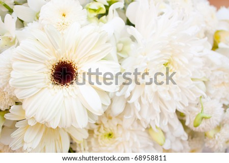 Among white, pure white flowers, fresh, clean look and help.