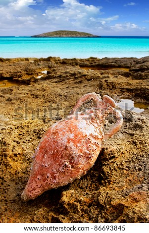Amphora roman clay pottery with marine fouling in Mediterranean rock beach [Photo Illustration]