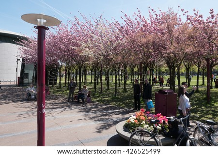 Amsterdam, Netherlands - May 5, 2016: Museumplein, pink trees and unknown people