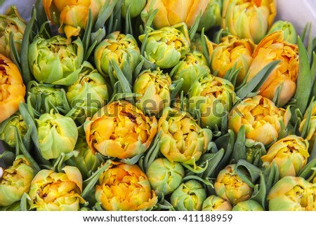 AMSTERDAM, NETHERLANDS. Sale of tulips of various grades in the Flower market. The flower market is one of sights of the city - stock photo