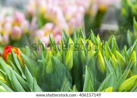 Amsterdam, sale of flowers in the flower market. Bouquets of various tulips - stock photo