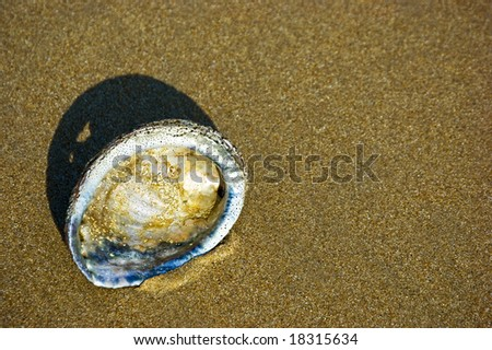 An abalone shell at the sand