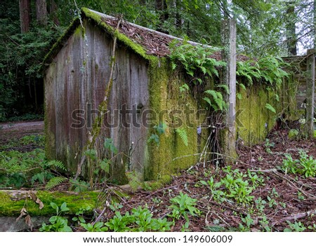 An abandoned logger's shack from the 1800's along the coast in the California Redwoods. - stock photo