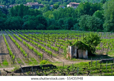An abandoned stone hut in a vineyard in France