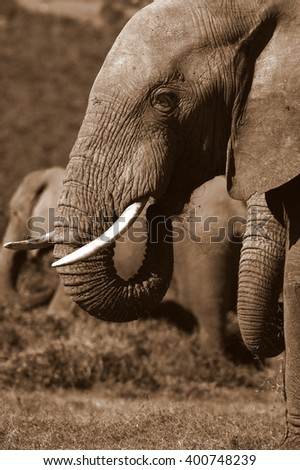 An abstract black and white image of a herd of elephants close up. - stock photo