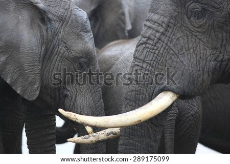 An abstract image of a herd of elephants close up. - stock photo