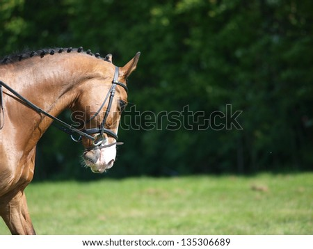An abstract shot of a horse during a dressage competition. - stock photo