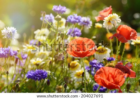 An abundance of wild meadow flowers growing on a community garden allotment in late afternoon sunlight. - stock photo