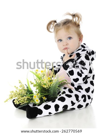 An adorable baby girl with a lap full of wild flowers, thinking in her cow costume.  On a white background. - stock photo