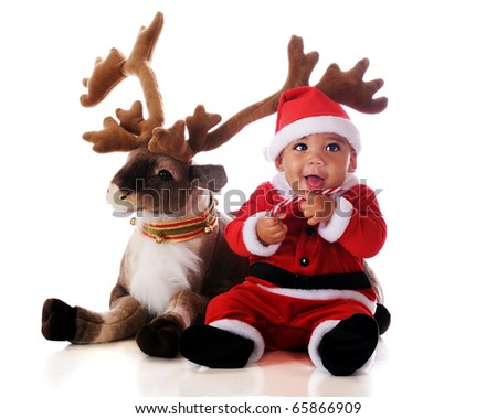 An adorable biracial baby in a Santa suit, snacking on a candy cane by his reindeer.  Isolated on white. - stock photo