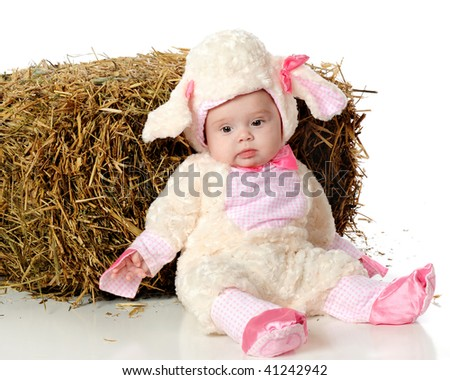 An adorable but sad-looking baby girl dressed as a woolly sheep while sitting against a bale of hay.  Isolated on white.