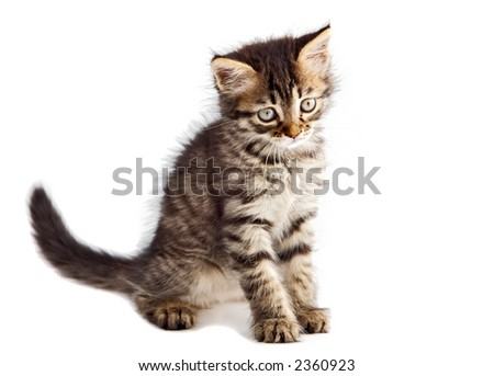 an adorable cat a over white background