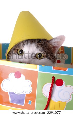 An adorable cat with a birthday hat. The cat is sitting in a gift bag. - stock photo