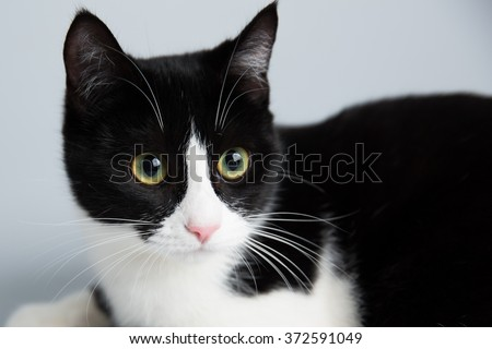 an adorable cute black and white cat