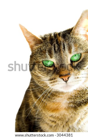 An adorable green eyed cat sitting on a window sill - stock photo