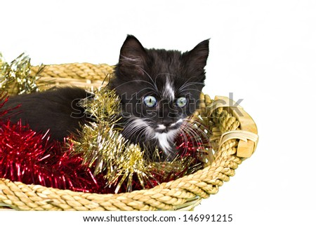 An adorable kitten in basket with Christmas decorations. Isolated on white. - stock photo