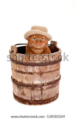 An adorable orange Tabby cat wearing a crocheted, brimmed hat sits in an old, wooden, well bucket. Shot in the studio on a white background. - stock photo