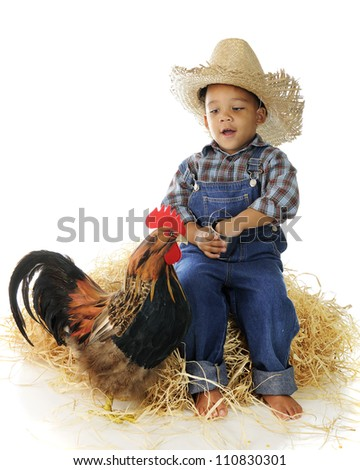 An adorable preschool farm boy feeding a rooster from a tiny pail while sitting on a stack of hay.  On a white background.