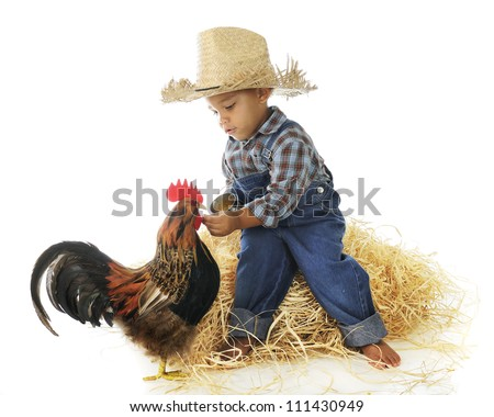 An adorable preschool farm boy hand feeding a rooster.  On a white background.