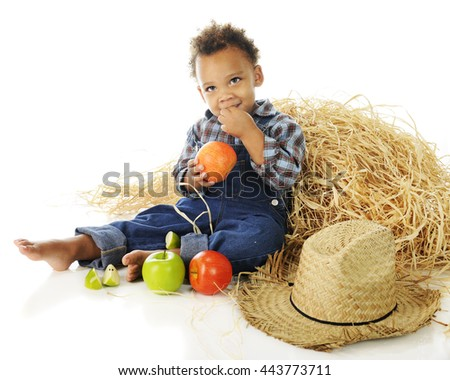 An adorable preschooler barefoot and in overalls, munching on apples  while sitting by a haystack.  On a white background. - stock photo