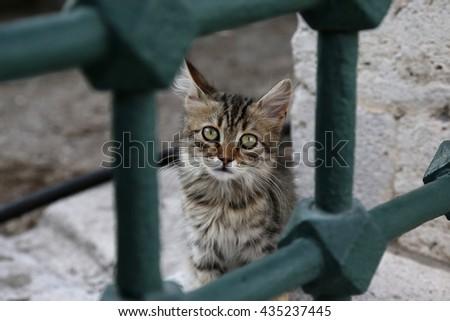 An adorable tabby kitten looking at the camera with a sad look.  - stock photo