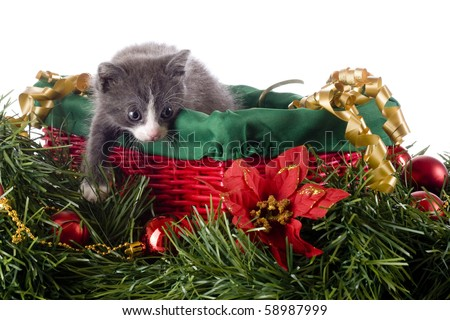 An adorable young kitten climbing out of a basket among other Christmas decorations.  Isolated on white. - stock photo