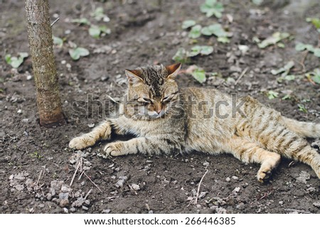 An Adult Tabby Cat Outdoors