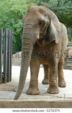 Stock images royalty free images vectors shutterstock for Elephant barcellona