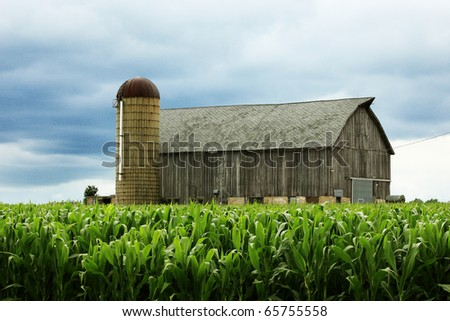 An aging wooden barn and a silo in the middle of a corn field.