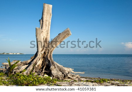 An alone wood on sea shore - stock photo