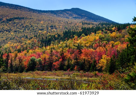 An alpine forest in fall stretches to a bog in horizontal perspective - stock photo
