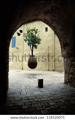 An amazing tree growing in the air - Jaffa, Israel - stock photo
