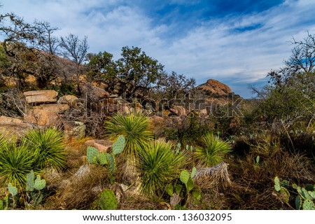 An Amazing View of Turkey Peak and Beautiful Western Plants on the Amazing Granite Stone Slabs and Boulders of Legendary Enchanted Rock, a Small Dome Mountain, Texas. - stock photo