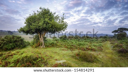 An ancient gnarled holly tree and a misty sunrise at Bratley View in the New Forest - stock photo