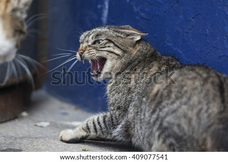 An angry cat looking to an other cat - stock photo