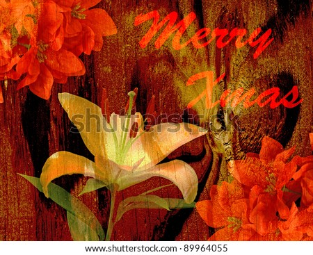 An Antique Vintage high contrast textured lily and poinsettias for your Christmas use - stock photo