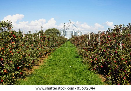 an apple orchard in Southwestern Ontario - stock photo