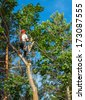 An Arborist Cutting Down a Tree Piece by Piece - stock