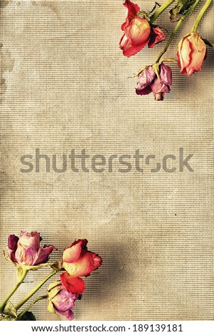 An arrangement of dried flowers in two corners of the frame. - stock photo
