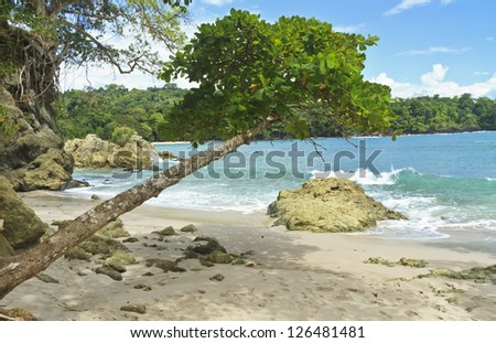 An askew shade tree on the south end of Playa Manuel Antonio in Manuel Antonio National Park, Costa Rica - stock photo
