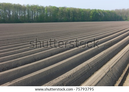 An asparagus field in the Netherlands - stock photo