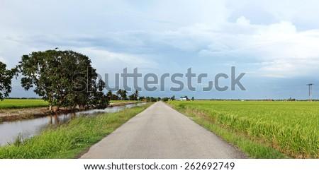 An asphalt road through a tropical rural rice field plantation.  - stock photo