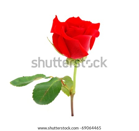 An assorted red rose on gift