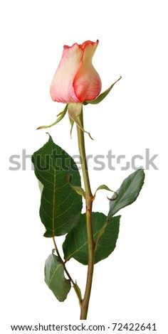 An assorted rose bloom - stock photo
